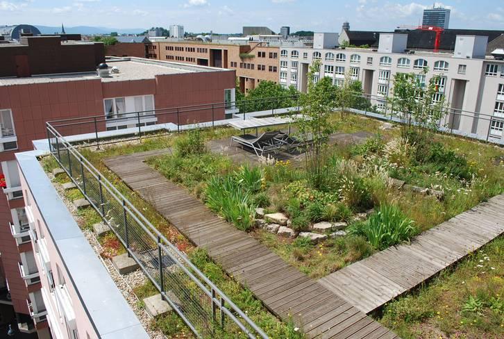 Referenzobjekt Naturdach Umweltamt Karlsruhe